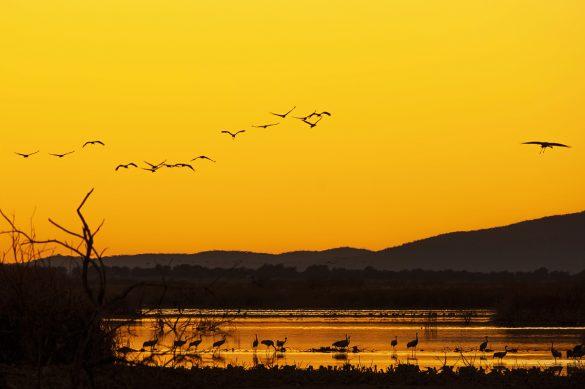 Nuevos horizontes para la fotografía de naturaleza (II)