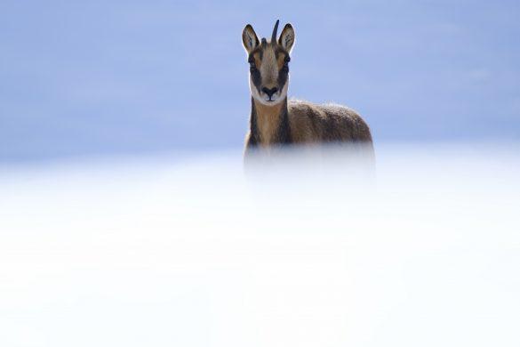 """Guía """"Fotografía de naturaleza"""" de Kiko Arcas"""